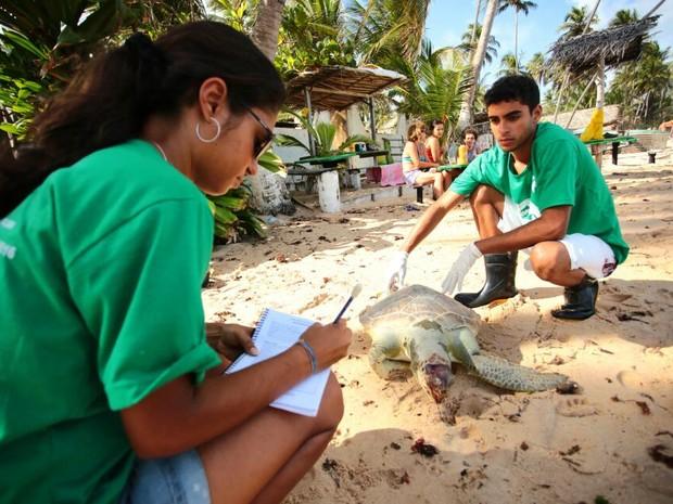 Freiwilligenarbeit Brasil Biota