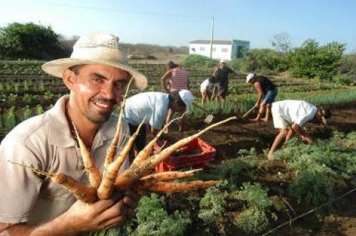 Praktika Brasil Naturargo